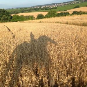 Schatten eines Reiters mit Pferd im Getreidefeld