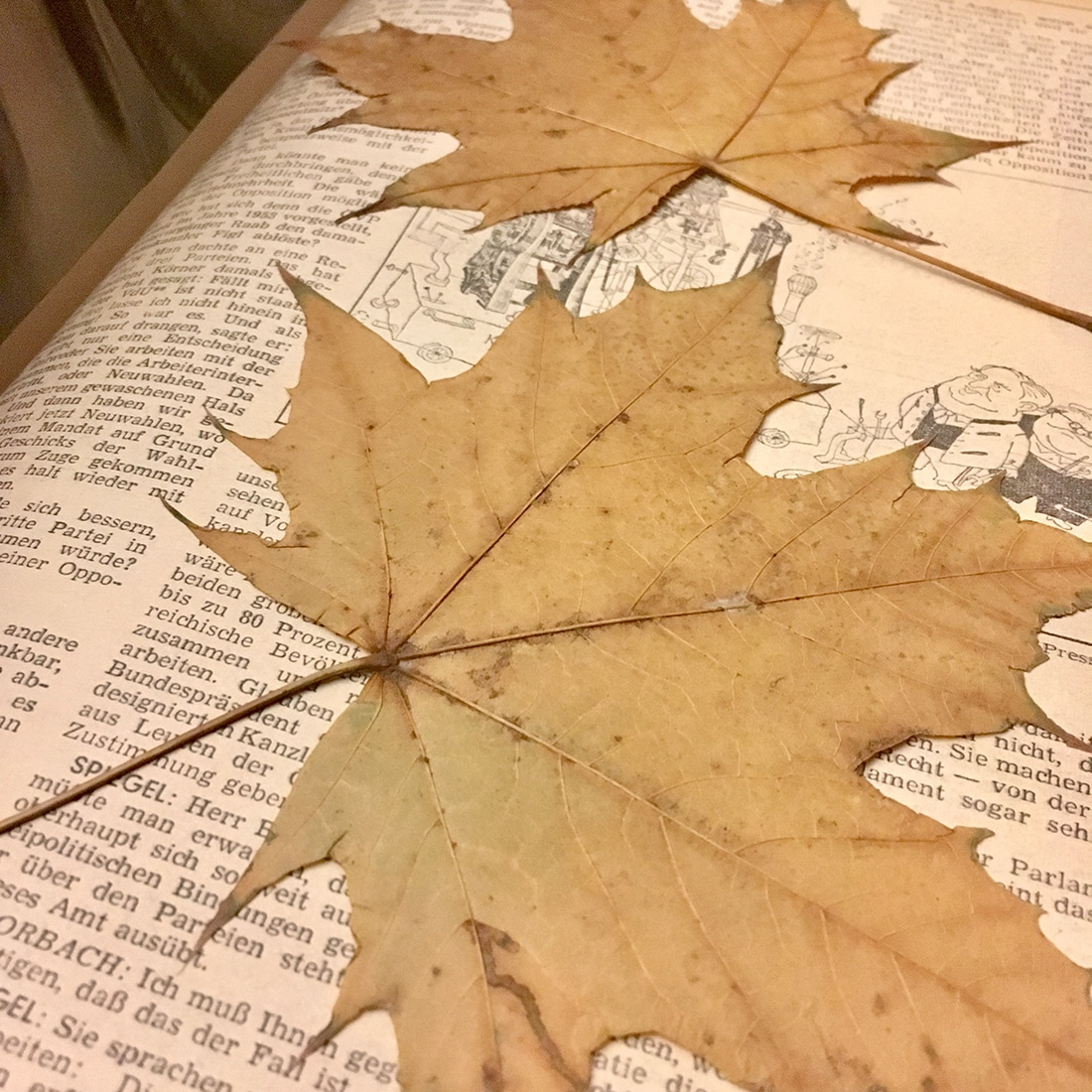 Gepresste Blätter liegen in einem Buch
